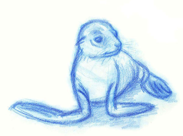 Illustration of a sea lion pup