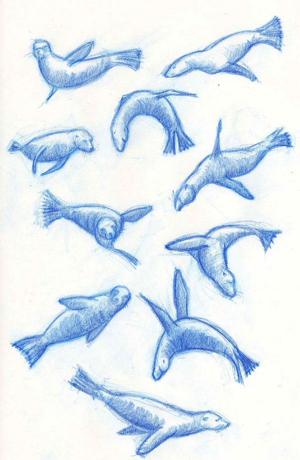 Illustrations of Sea Lions Swimming