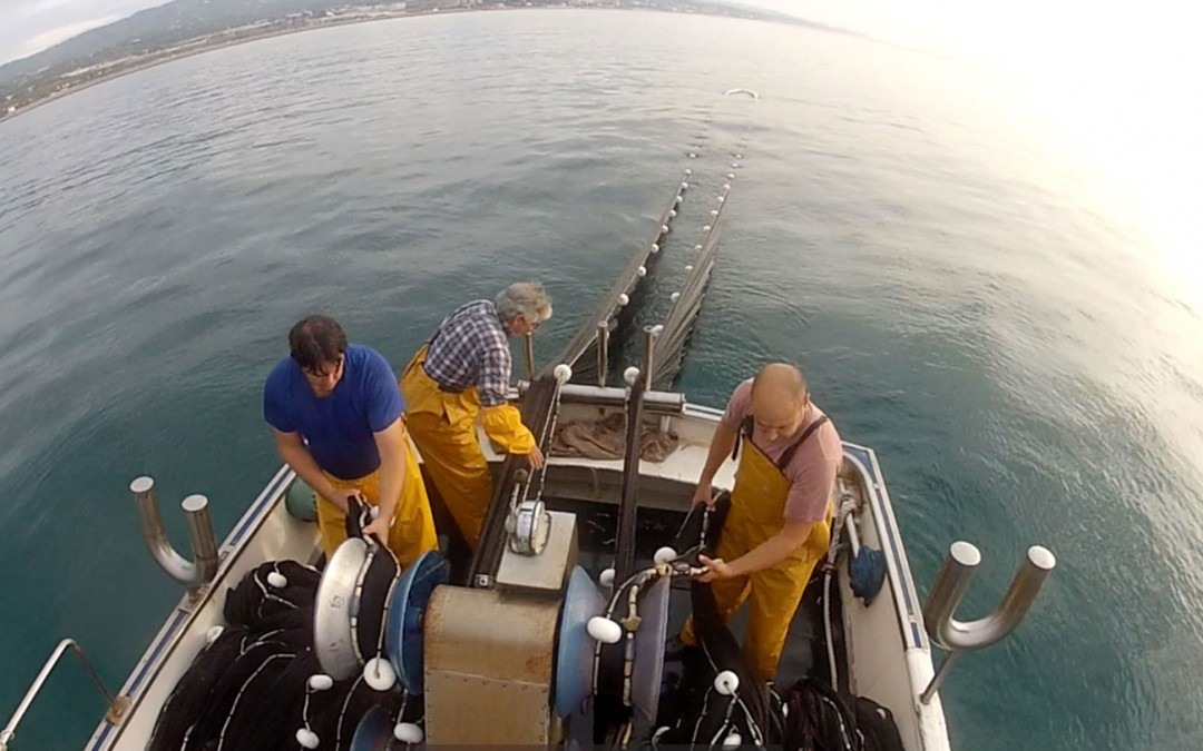 A sustainable sandeel fishery in the Mediterranean.