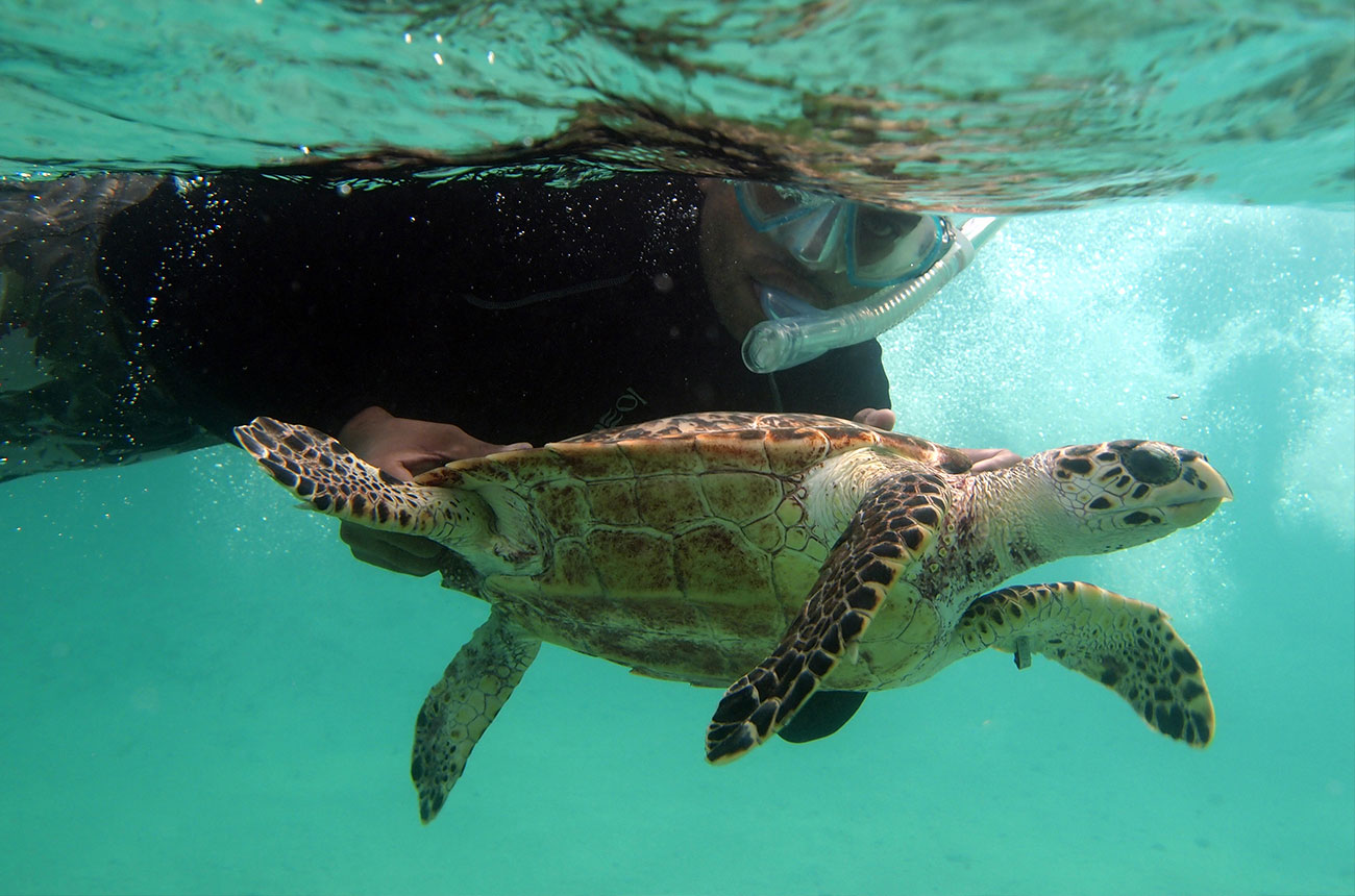 Amdeep Sanghera turtle tagging in the Turks and Caicos Islands
