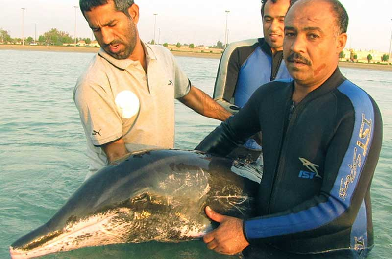 Plan for the Land Society trained local citizens to rescue stranded dolphins